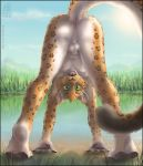 all_fours anus ass cute feline furry green_eyes happy hindpaw leopard looking_at_viewer male nude playful raised_tail sheath solo tail testicles zen zen_(artist)