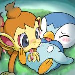 chimchar piplup pokemon tagme