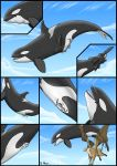 ! 2010 ? avian blue_eyes cetacean closed_eyes cloud comic detailed_background dolorcin duo feathers feral flying full_tour genital_slit gryphon marine mountain open_mouth orca pussy sky tongue tongue_out vore whale wings